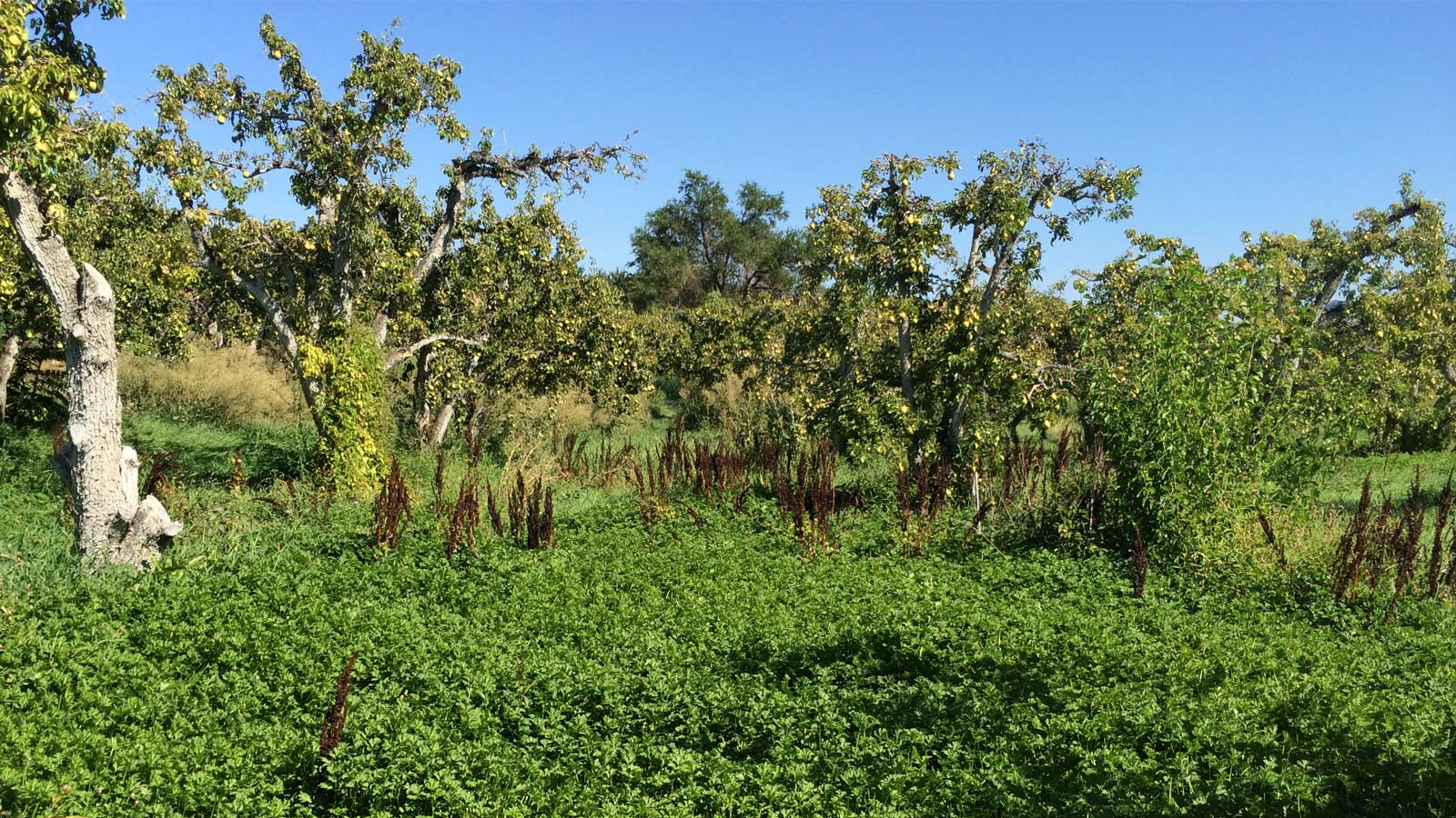 Backyard Fruit Tree Removal Program